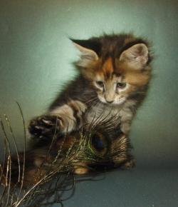 Удивительное фото с котёнком